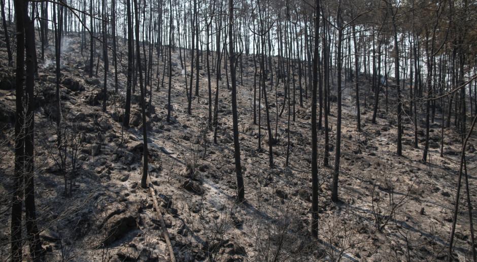 Turcja: Liczba ofiar pożarów na południu kraju wzrosła do sześciu