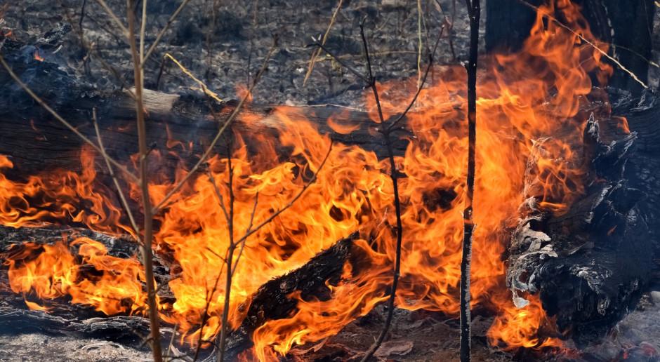 Grecja: Pożar na Peloponezie, szpitale w stanie gotowości