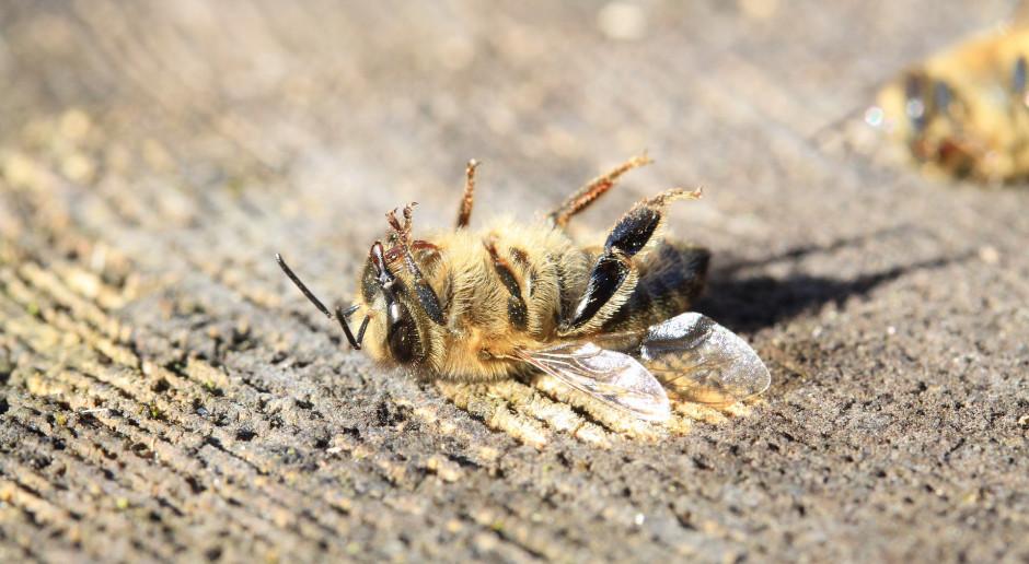 Popularne pestycydy szkodzą pszczołom