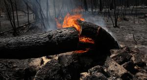 Grecja: Pożar szaleje tu już szósty dzień