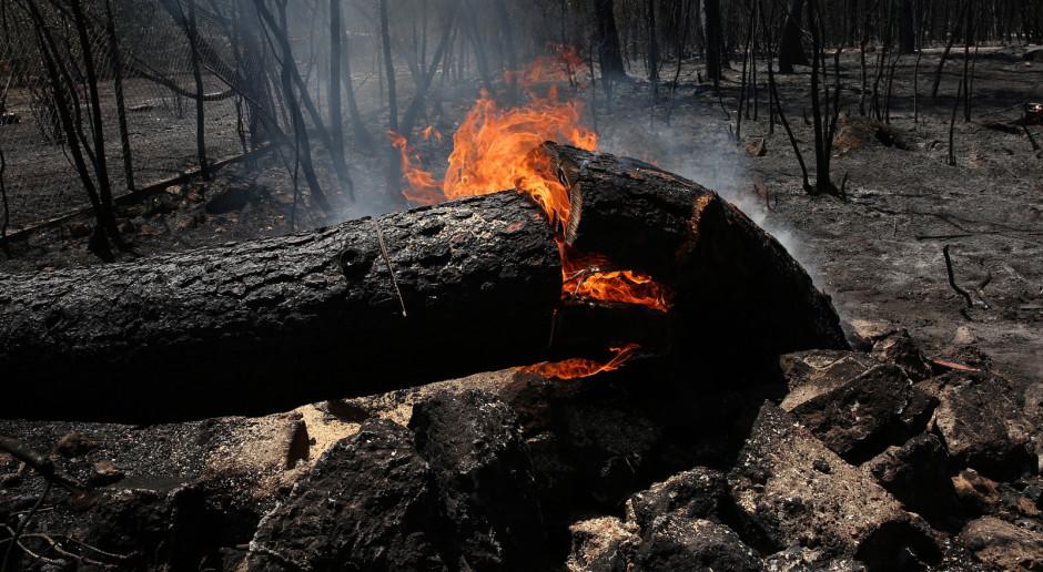 Grecja: Z Eubei uciekły tysiące osób. Pożar szaleje tu już szósty dzień