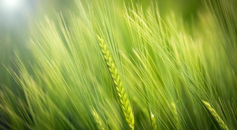 Kanada: Zmagający się z problemem suszy farmerzy wracają do dawnych metod w rolnictwie