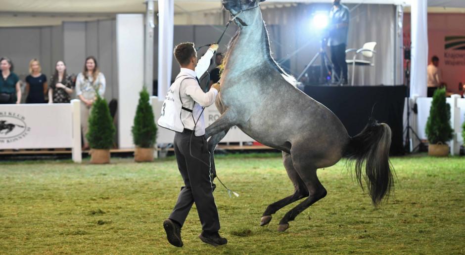 Lubelskie: Klacz Palanga najlepszym koniem pokazu w Janowie Podlaskim