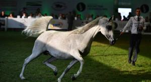 1,6 mln euro za konie na aukcji Pride of Poland