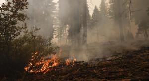 103 pożary pustoszą USA