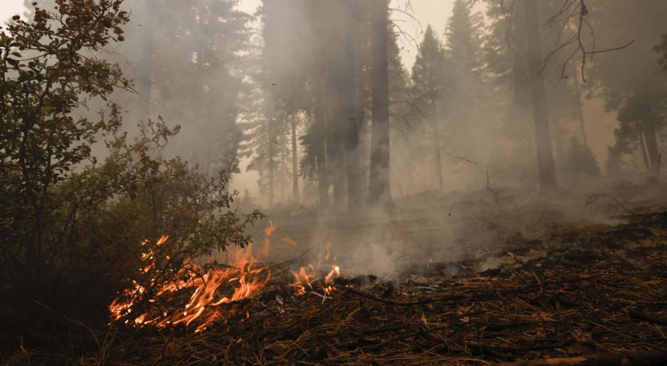 USA: 103 pożary pustoszą kraj, tysiące ludzi ewakuowanych