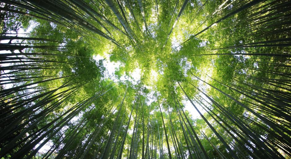 Ekspert z UW: W perspektywie zmian klimatu dbajmy o renaturyzację krajobrazu, odtwarzanie lasów i zasoby wody