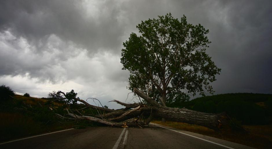 Kanada: Huragan Larry wyrywa drzewa w Nowej Fundlandii