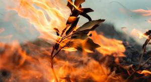2021 rekordowy, jeśli chodzi o zasięg pożarów lasów w Rosji