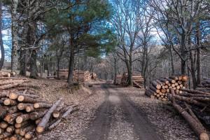 Ceny drewna biją rekordy. Padają oskarżenia o sabotaż gospodarczy